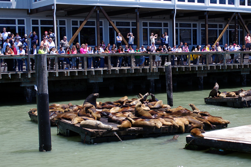 Sea lions watching the tourists at Pier 39