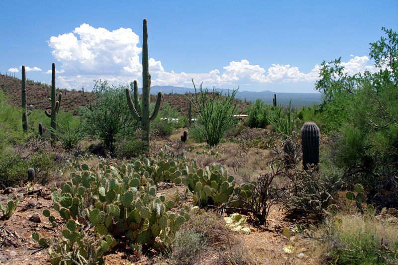 View from the Arizona-Sonora Desert Museum