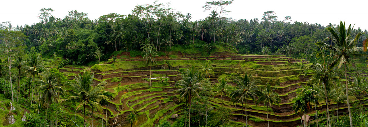 Panorama of the rice terraces in Tegallalang, Bali