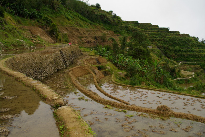 Banaue rice terraces up close