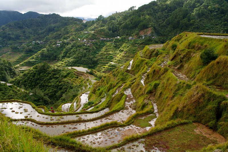Wrap-around Banaue rice terraces