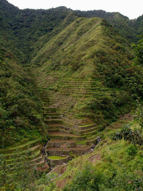Mountainside terraces on the walk to Batad, Philippines