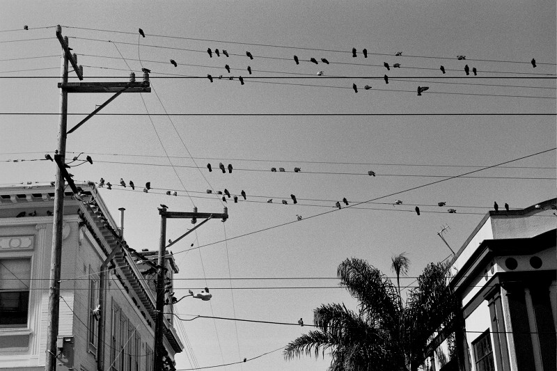 Birds on wires at 16th and Albion