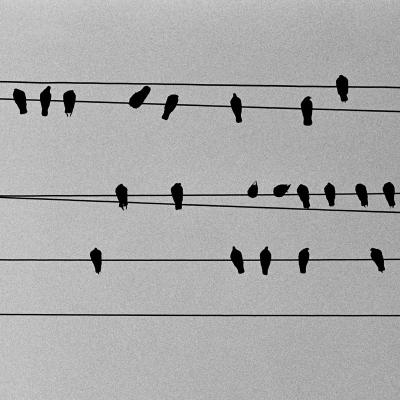 Silhouetted pigeons on wires from below
