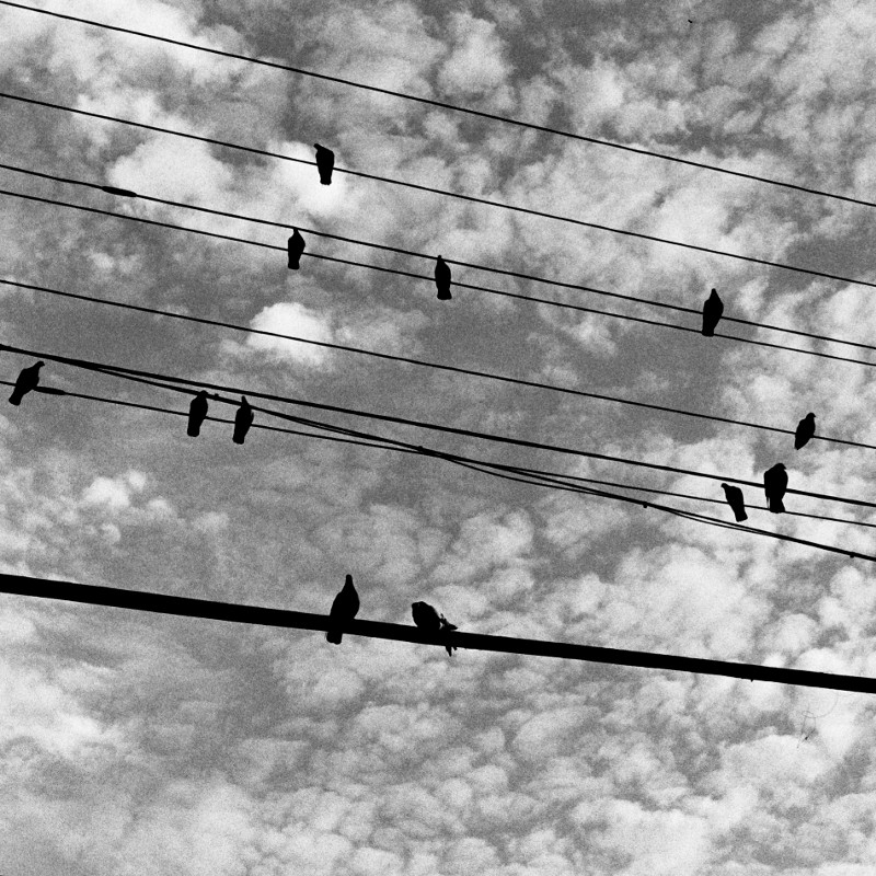 Marbled clouds behind silhouetted pigeons on wires