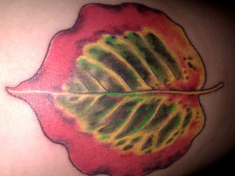 Tattoo by Ellen at Chameleon Tattoo & Body Piercing of my Callery pear leaf photo for Mel Goldsipe