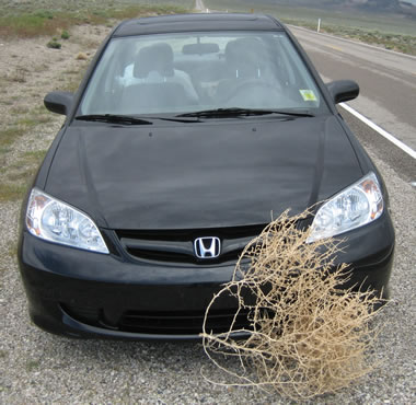 tumbleweed stuck on car