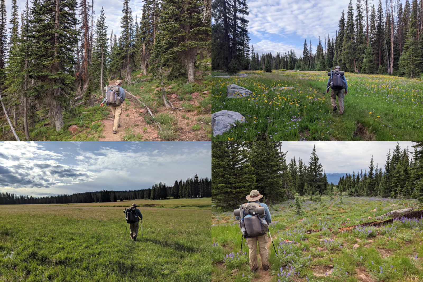 Collage of 4 photos of Dad on the CDT in the Huston Park Wilderness