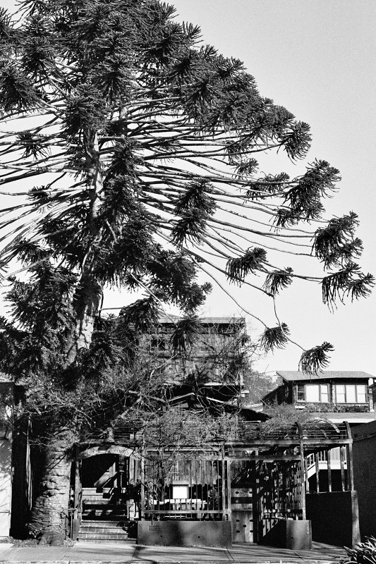 Chez Panisse (in black and white)
