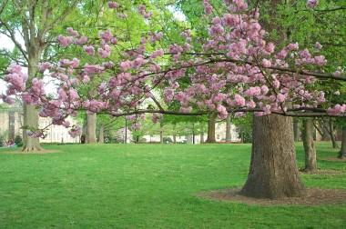 Coker arboretum flowers justinsomnia pink flowering tree mightylinksfo