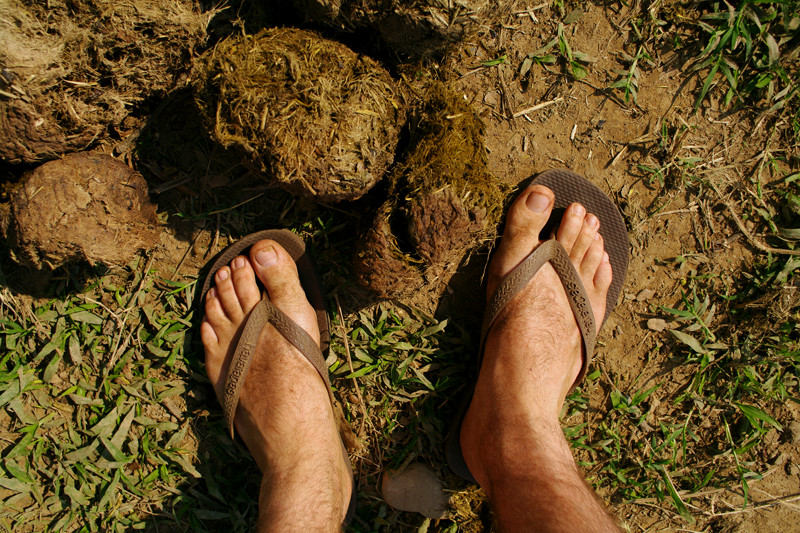 Dirty feet and elephant poop at Elephant Nature Park in Chiang Mai, Thailand