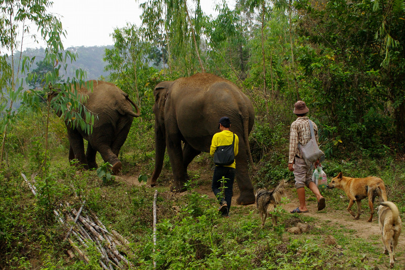 Hiking with the elephants Mae Perm and Jokia to the Elephant Haven at Elephant Nature Park in Chiang Mai, Thailand