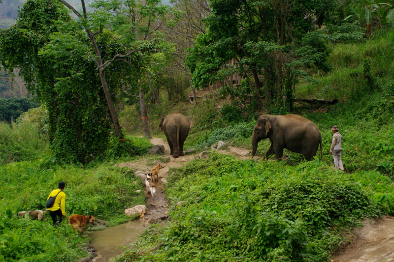 Hiking with the elephants to the Elephant Haven at Elephant Nature Park in Chiang Mai, Thailand