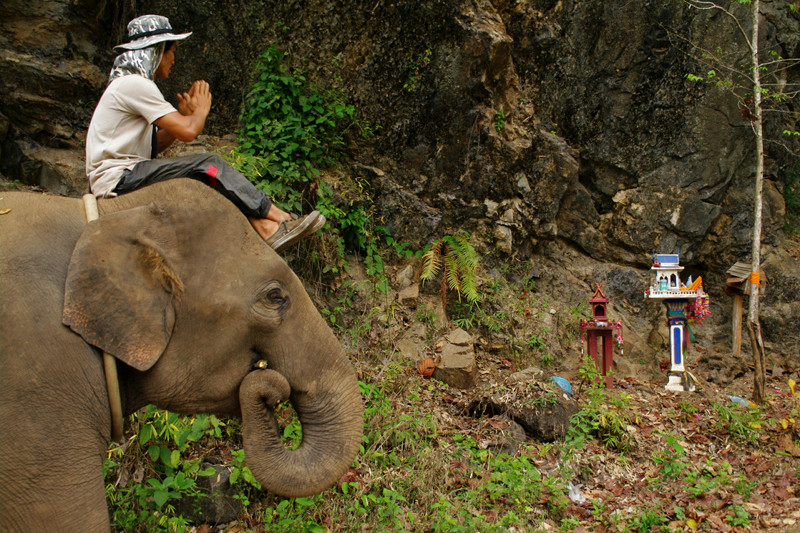 Hope's mahout pays respect to Buddhist shrines on the way to Elephant Haven at Elephant Nature Park in Chiang Mai, Thailand