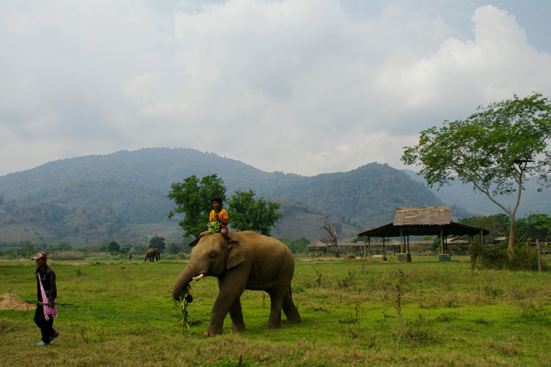 Elephant with two mahouts at Elephant Nature Park in Chiang Mai, Thailand