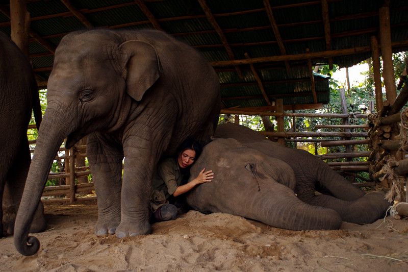 Sangduen 'Lek' Chailert singing an elephant to sleep at Elephant Nature Park in Chiang Mai, Thailand