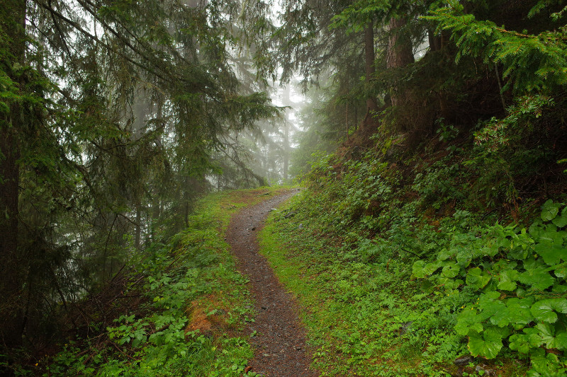 In the forest and fog on the GR5
