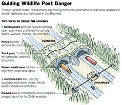 Infographic: Guiding Wildlife Past Danger