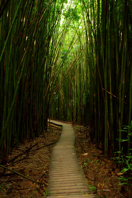 Hiking through the bamboo forest on the Pīpīwai Trail to Waimoku Falls, Haleakalā National Park, Maui, Hawaii