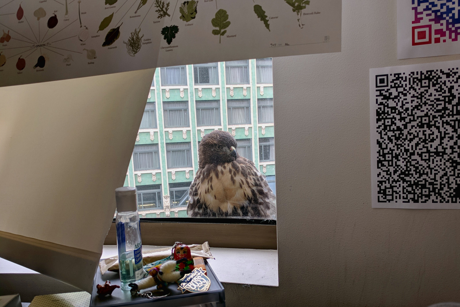 Hawk in San Francisco from my desk