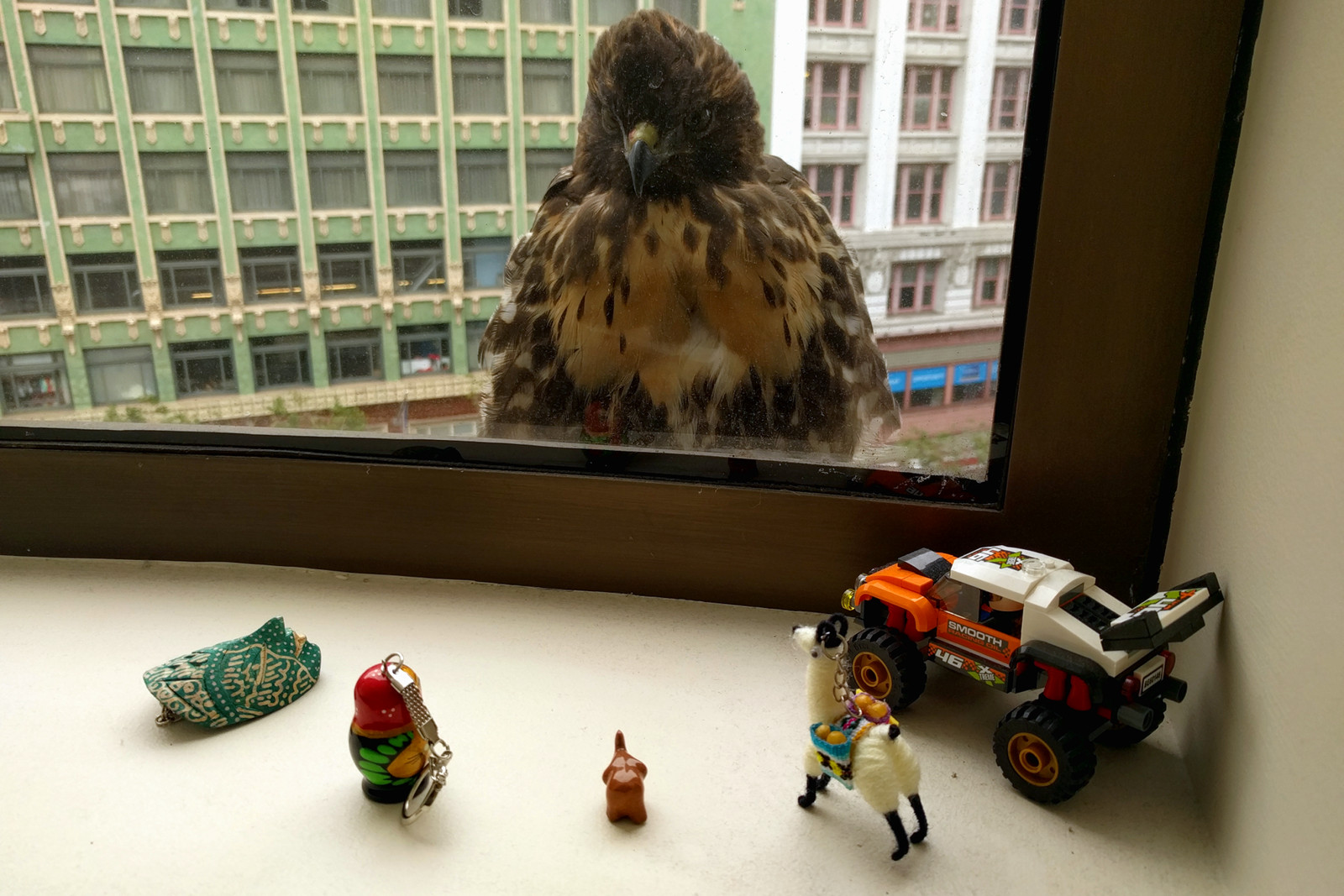 Hawk in San Francisco with toys
