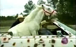 Patches the Horse, riding in a car