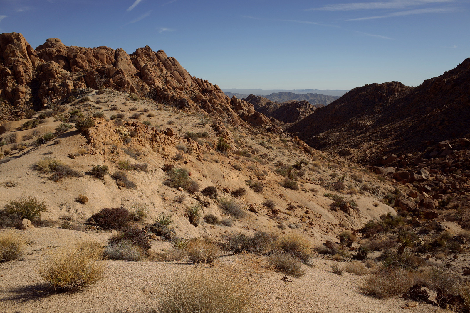 Desert vista from just above Lost Palms Canyon in Joshua Tree National Park