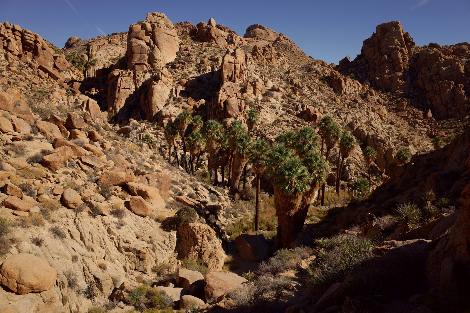 Lost Palms Canyon in Joshua Tree National Park