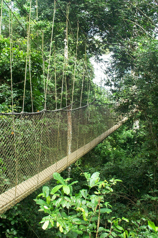 first view of the canopy walk
