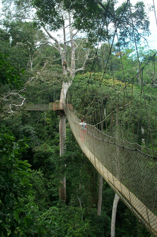 last view of the canopy walk