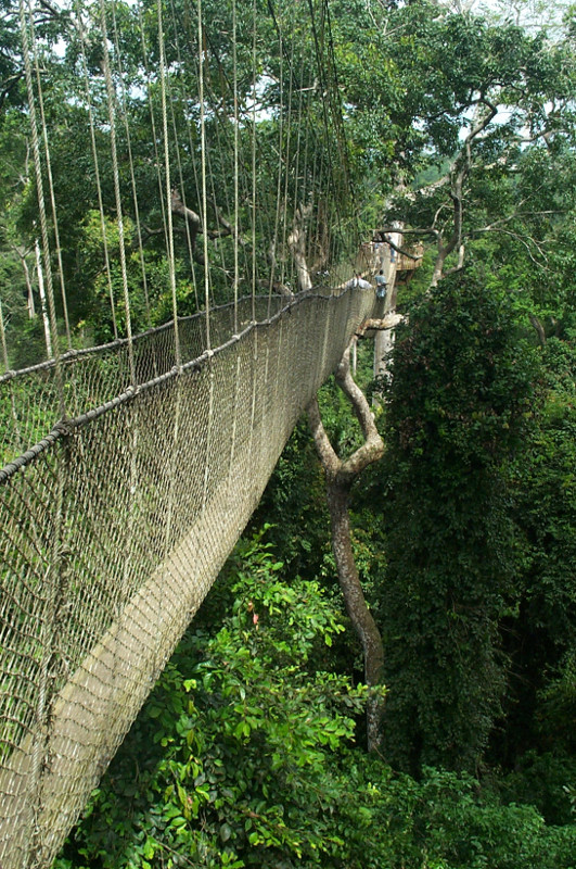 kakum national park nice view of the canopy walk