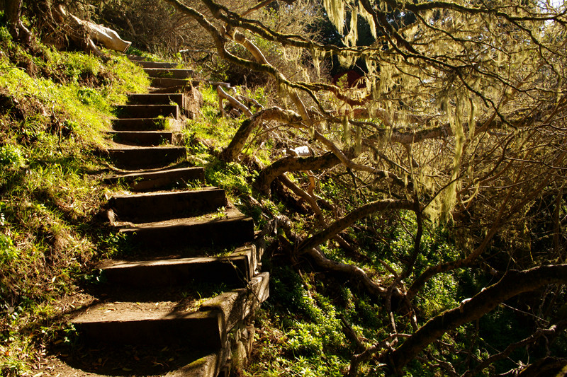 A staircase enshrouded with Spanish moss on the Matt Davis Trail in Mt Tamalpais State Park, California