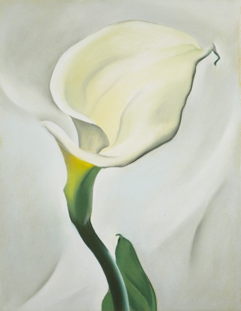 georgia o'keeffe's calla lily turned away painting