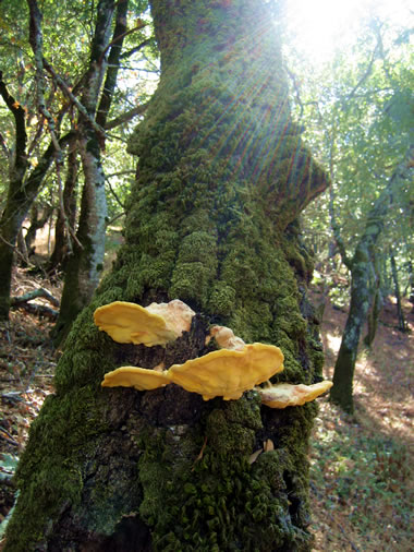 Tree Fungus at Olompali State Historic Park