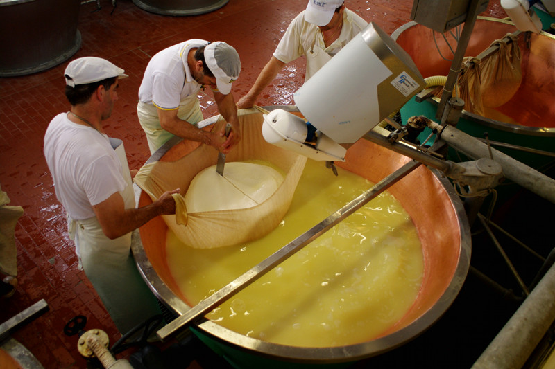"Cutting the 90kg mass of cheese curds into ""twins"" of Parmigiano-Reggiano cheese"