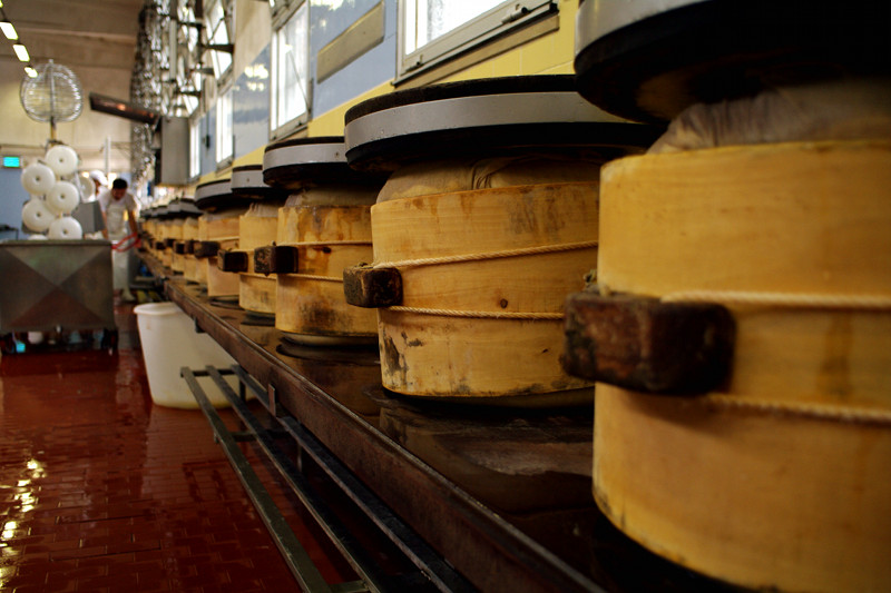 Cheese press at the Parmigiano-Reggiano cheese factory