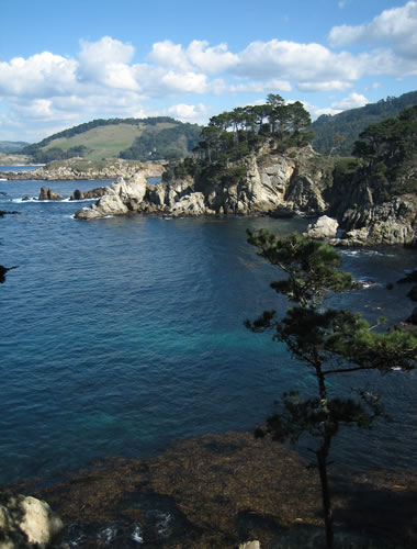 Looking out across Bluefish Cove at Point Lobos State Reserve