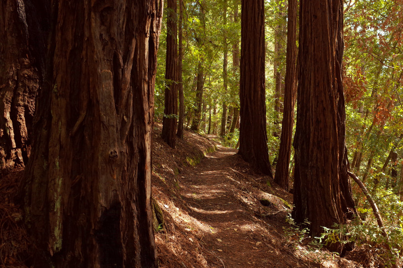 Slate Creek Trail in Portola Redwoods State Park