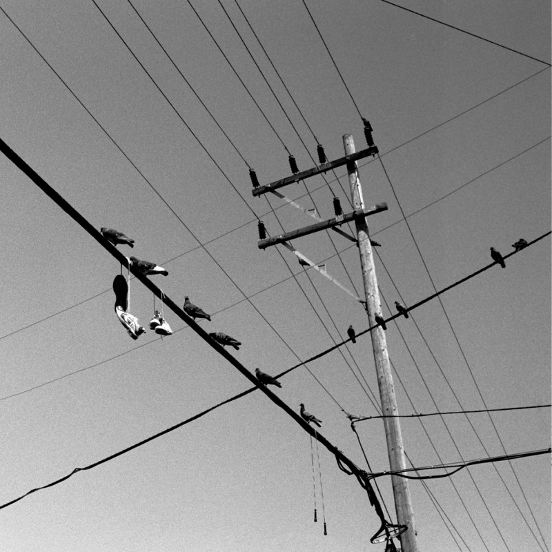 Pigeons, two pairs of shoes, and a jump rope on the power lines