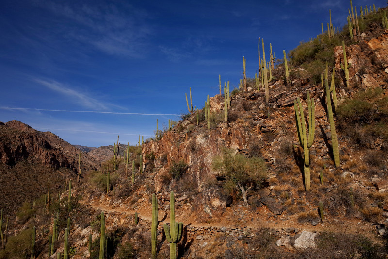 Cactused hillside in Sabino Canyon, Tucson, AZ