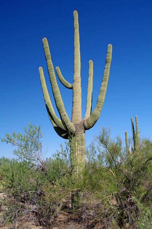 Saguaro National Park - Justinsomnia