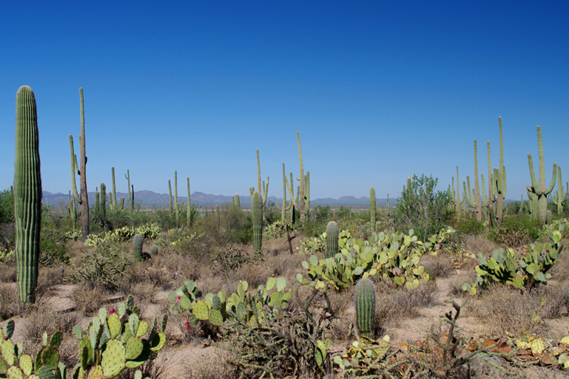 View from the Desert Discovery Trail at Saguaro National Park