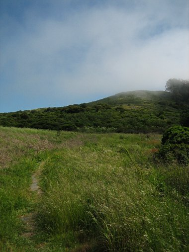San Bruno Mountain State Park hillside with fog wisps