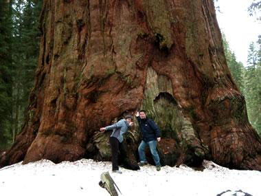 Justin and Stephanie touching General Sherman at Sequoia National Park