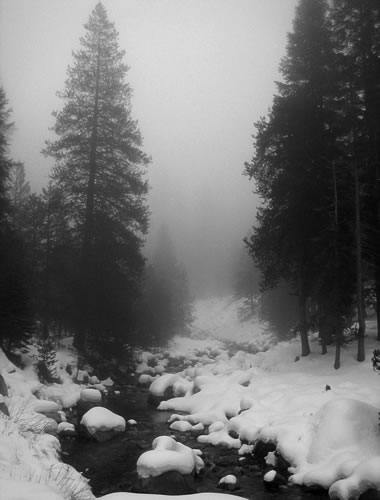 Thick fog along the Tokopah Valley Trail at Sequoia National Park