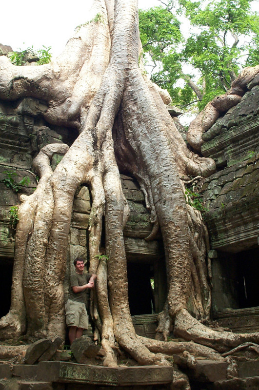 Justin posing in between the giant spung tree roots at Ta Prohm
