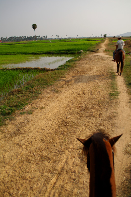 Riding horses through the rice paddies around Siem Reap, Cambodia