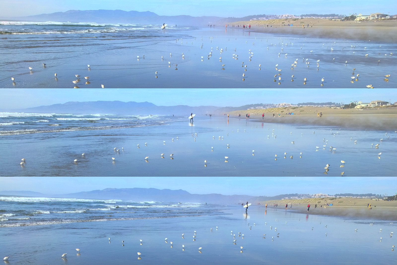 Triptych of snowy plovers on Ocean Beach, San Francisco, CA