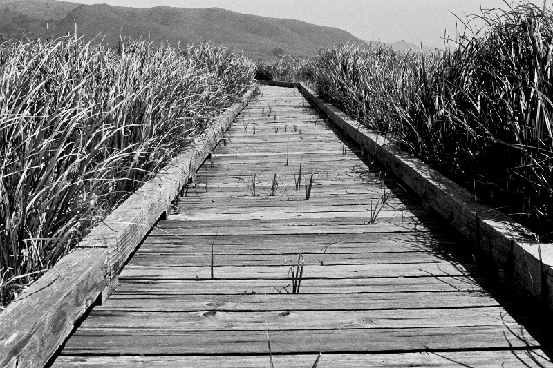 Boardwalk through tall grass at Sonoma Coast State Park