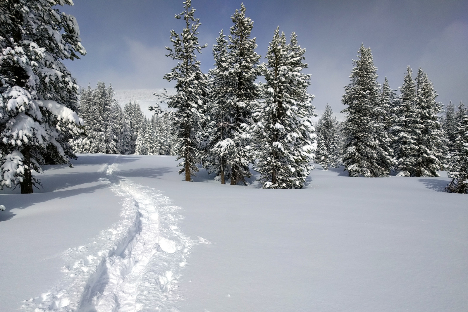 Snowshoe tracks through the trees around Lake Tahoe, California